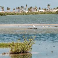 Un conseil scientifique territorial du patrimoine naturel a été créé à Saint-Martin